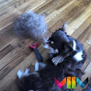 FURminator Hundebürste für große Hunde zur Entfernung der Unterwolle